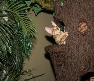 A kitten plays in a Hidden Hollow cat tree