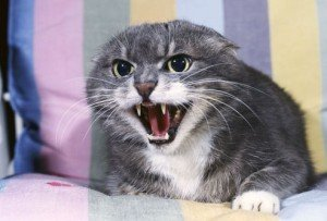 Fear aggression. Image courtesy of webmd.com