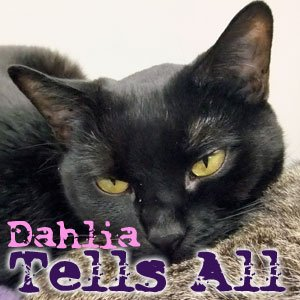Dahlia Tells All