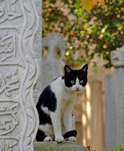 Cat by column inscribed in Arabic