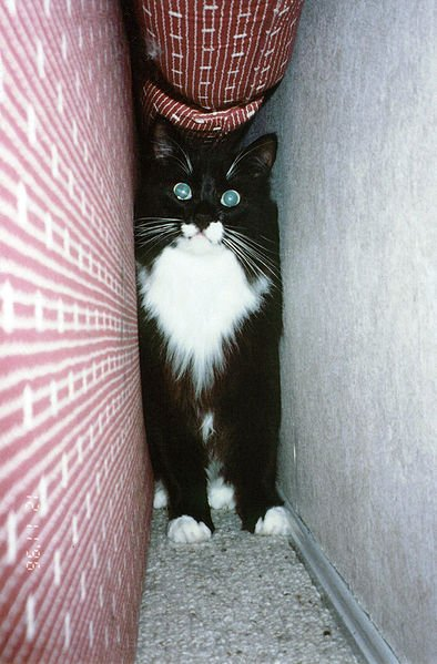 My Cat Keep Hiding