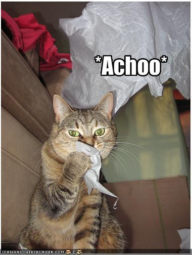 LOLcat: cat sneezing into a tissue with caption *Achoo*