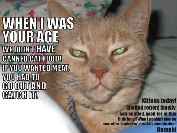 LOLcat picture: When I was your age ....