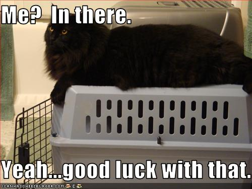 "LOLcat--caption reads ""Me? In there. Yeah...good luck with that."""