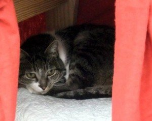 Thomas hiding in his cave. Photo by JaneA Kelley, licensed under a Creative Commons attribution/share-alike license.