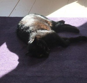 Dahlia basks in a sun puddle, Tuesday, April 3, 2012