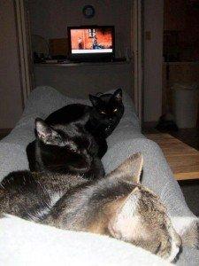 Thomas, Dahlia and Siouxsie on my lap