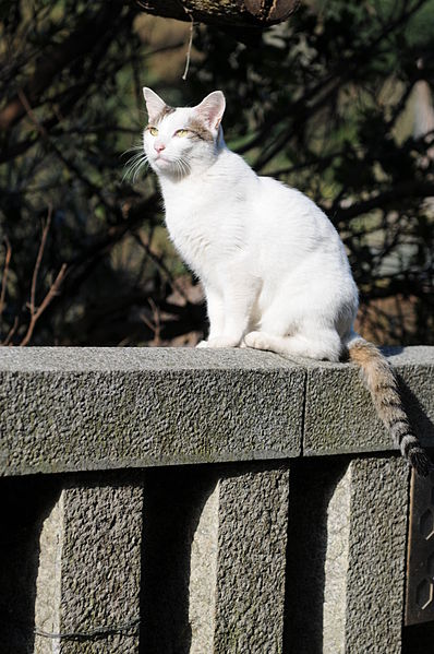 White cat with tabby-striped tail on a stone railing-Hisashi-01