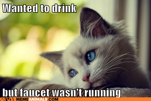 First World Cat Problems: Wanted to drink but faucet wasn't running