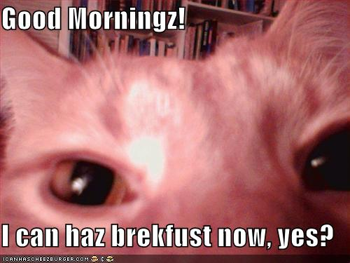 LOLcat image: Good Morning! I can haz breakfast now, yes?