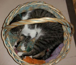 Thomas curled up in a basket with his toys