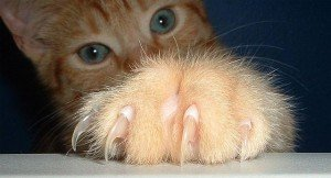 Cat's paw with claws extended