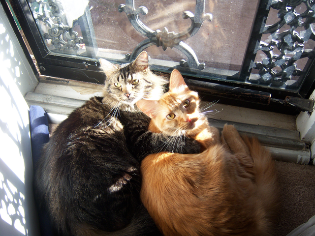 a pair of bonded cats shares a sun puddle on a window sill.