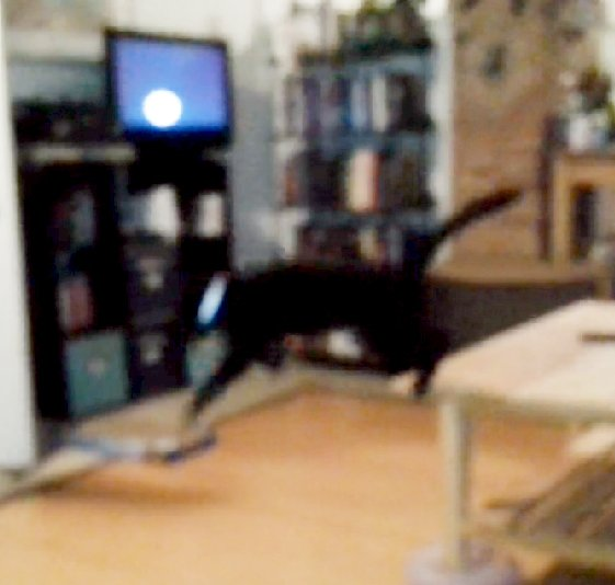 screen capture from the video of Bella jumping