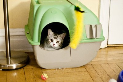 kitten inside a covered litterbox