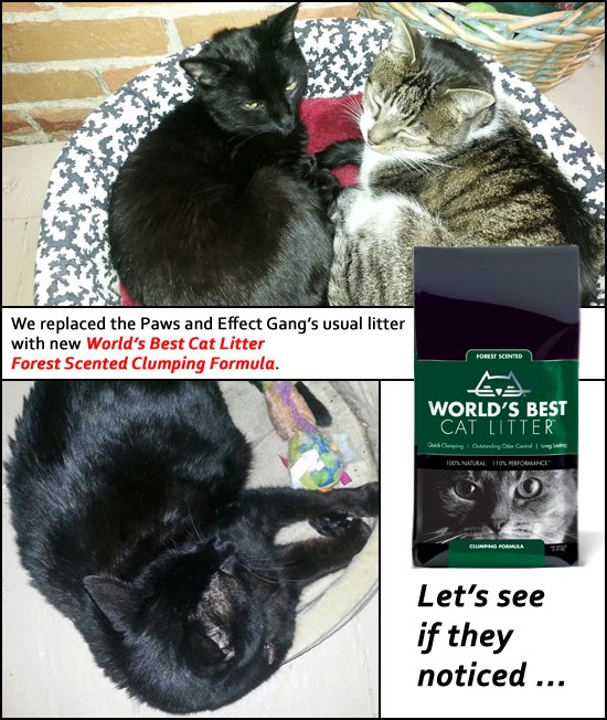 "Graphic featuring the words ""We replaced the Paws and Effect Gang's usual litter with new World's Best Cat Litter Forest Scented Clumping Formula. Let's see if they noticed."""