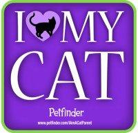 Yes, I AM a Cat Parent!