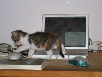 Meows on Videos: Fun or Stressful for Cats?