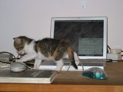 Kitten walking in front of laptop computer