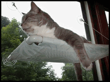 Cat window perch. Image courtesy of kaboodle.com