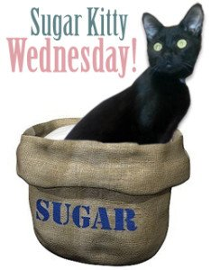 Sugar Kitty Wednesday