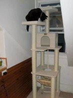 7-foot-tall Armarkat multi-level cat tower
