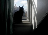 How Can We Prepare Our Cat For Our Son's Departure?