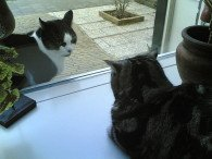 Two cats staring at each other, one inside and one outside