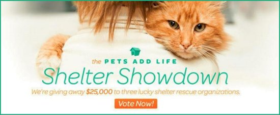 PAL Shelter Showdown graphic