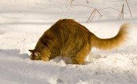 Why Is My Cat Digging and Digging and Digging?