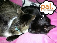 Win Prizes in the #PetsAddLife Poetry Contest