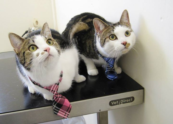 Jen's cats in ties-omg cute!