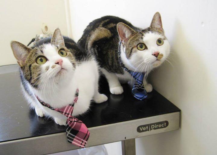 kitty litter accessories