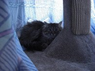 Scared cat hiding. Photo CC-BY-ND by Jon Ross