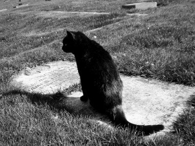 Cat on gravestone. Photo (CC-BY) Baby's In Black. Find her on Flickr