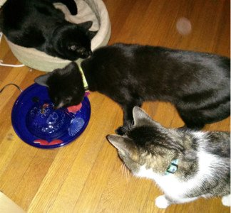 Siouxsie in her bed, Bella and Thomas investigating a new drinking fountain