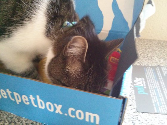 Thomas pokes his nose into the corner of the box