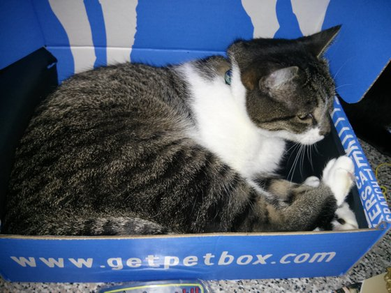 Thomas settles down for a snooze in the PetBox