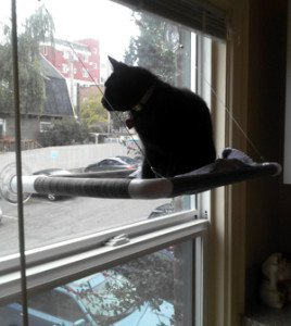 Bella the cat sits on a window-mounted cat perch