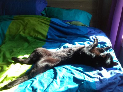 Belladonna sprawled upside down in a sun puddle