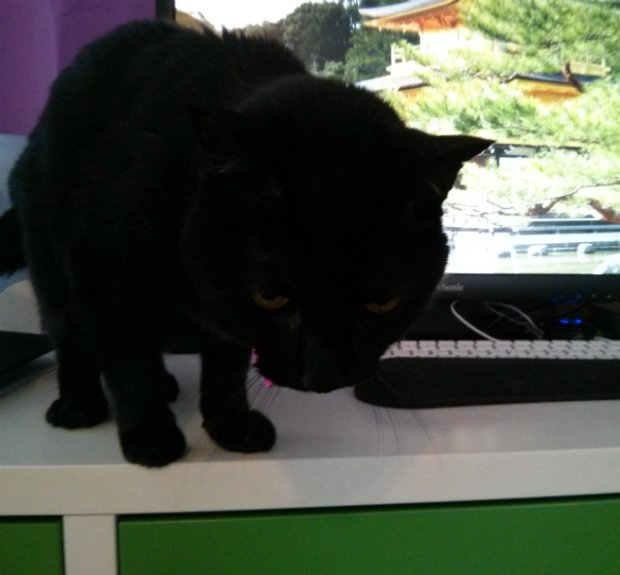 Siouxsie sits in front of a computer monitor displaying a Japanese nature scene