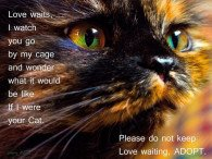 Love waits, I watch you go by my cage and wonder what it would be like if I were your cat.