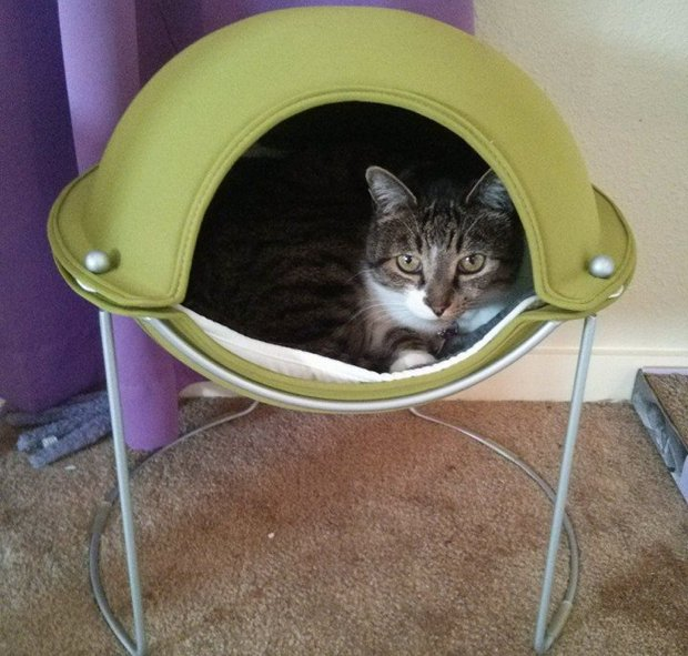 Thomas in a Hepper Pod