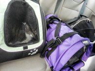 Three cats in carriers in the back seat of a car