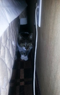 Thomas hides behind a bed in a hotel room