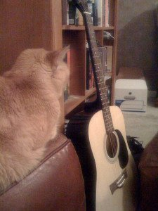 Orange cat sitting next to a guitar. Photo CC-BY-SA Randal Cooper