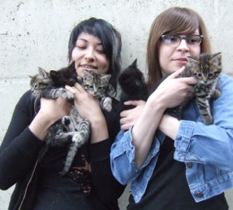 Two woman with a bunch of kittens