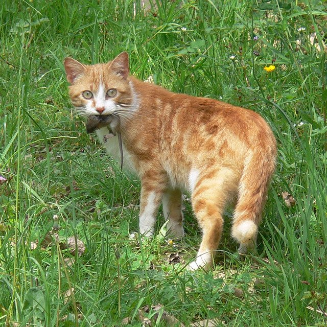 What Is The Best Cat Food For My Cat