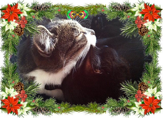 Thomas and Bella snuggled together, surrounded by a border of evergreen boughs and poinsettias