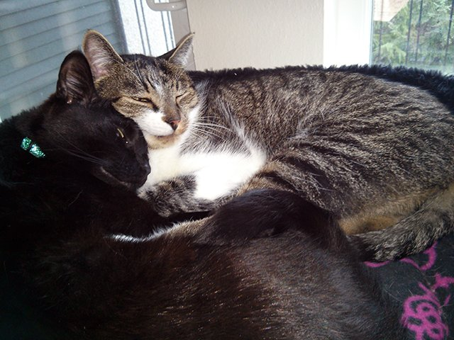 Bella and Thomas curled up together in a cat bed
